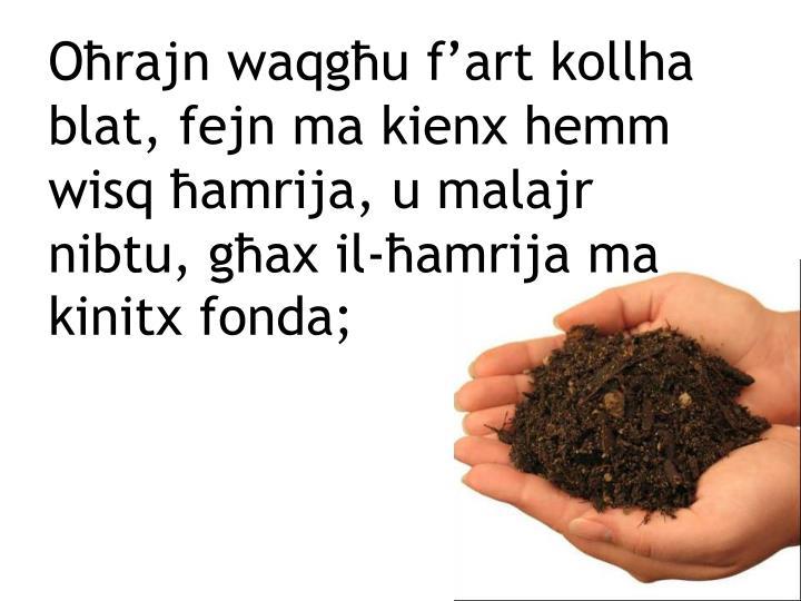 Oħrajn waqgħu f'art kollha blat, fejn ma kienx hemm wisq ħamrija, u malajr nibtu, għax il-ħamrija ma kinitx fonda;