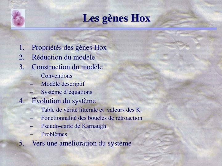 Les gènes Hox
