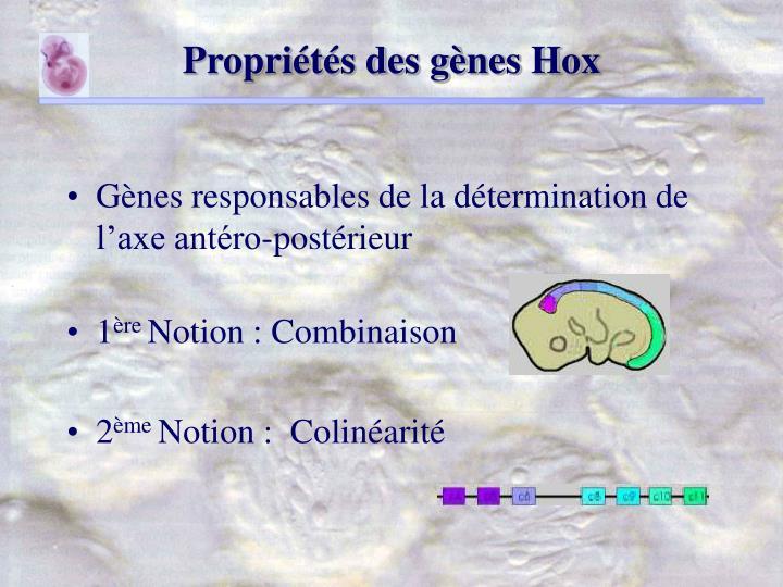 Propriétés des gènes Hox