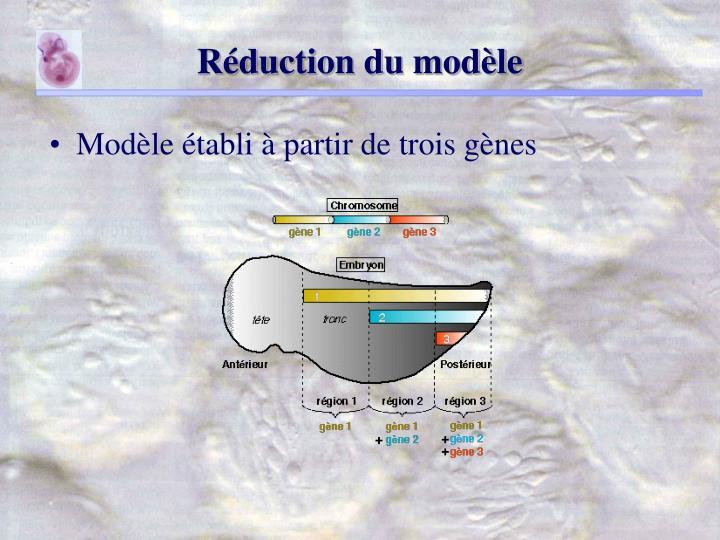Réduction du modèle
