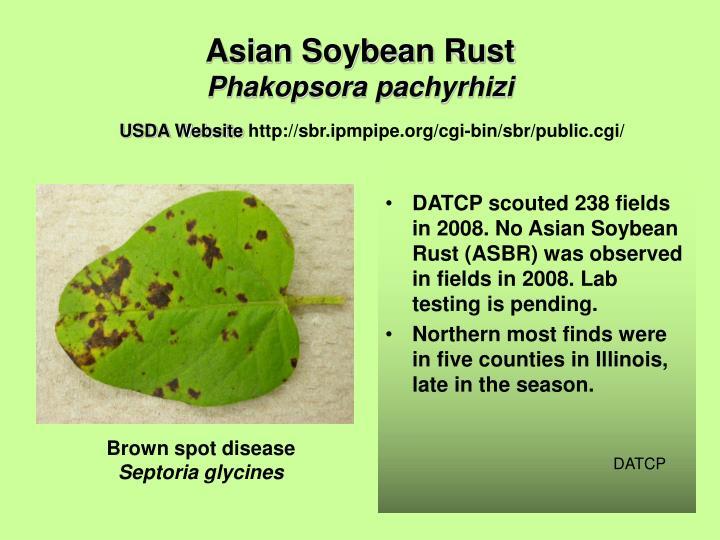 Asian Soybean Rust
