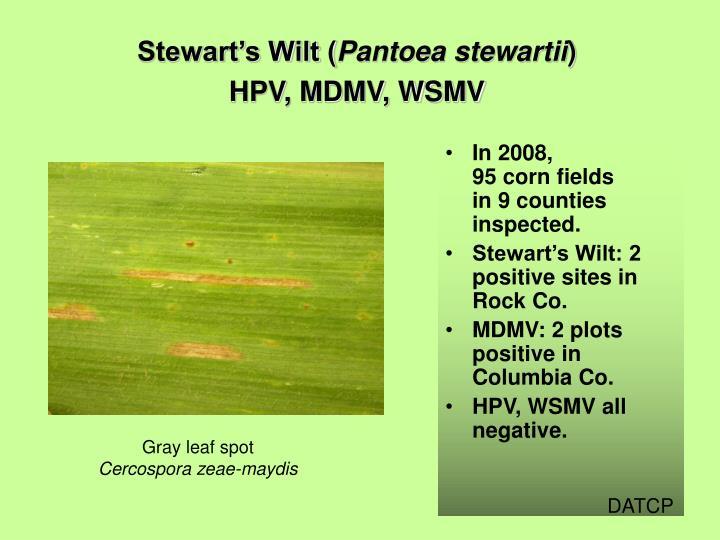 Stewart's Wilt (