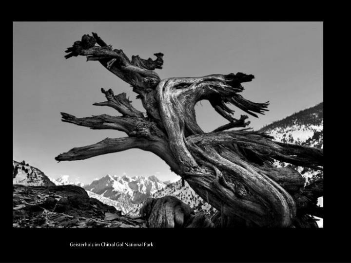 Geisterholz im Chitral Gol National Park