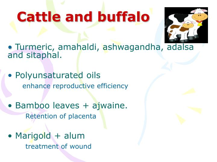 Cattle and buffalo
