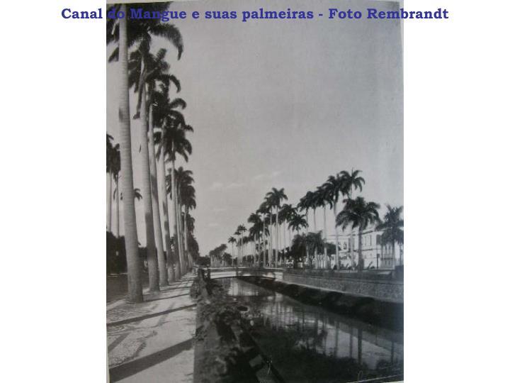 Canal do Mangue e suas palmeiras - Foto Rembrandt