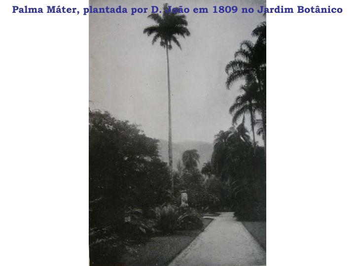 Palma Máter, plantada por D. João em 1809 no Jardim Botânico