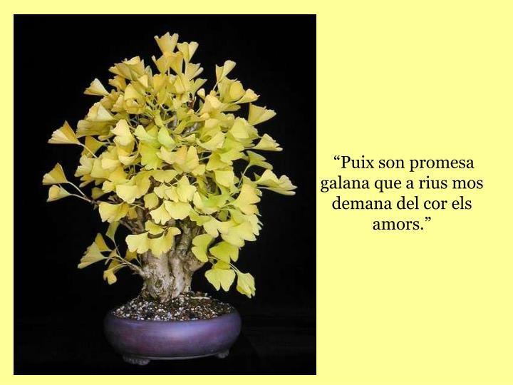 """""""Puix son promesa galana que a rius mos demana del cor els amors."""""""