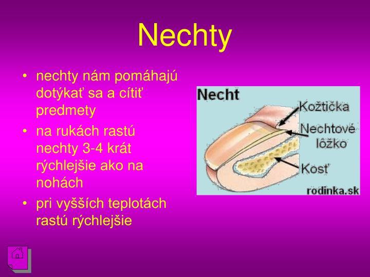 Nechty