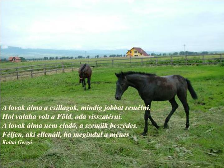 A lovak álma a csillagok, mindig jobbat remélni.