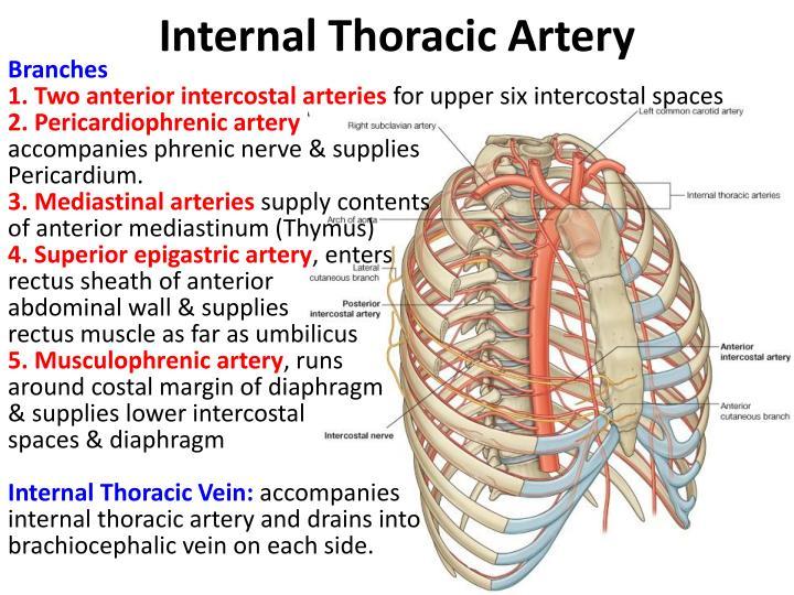 Superior Mesenteric Artery Diagram