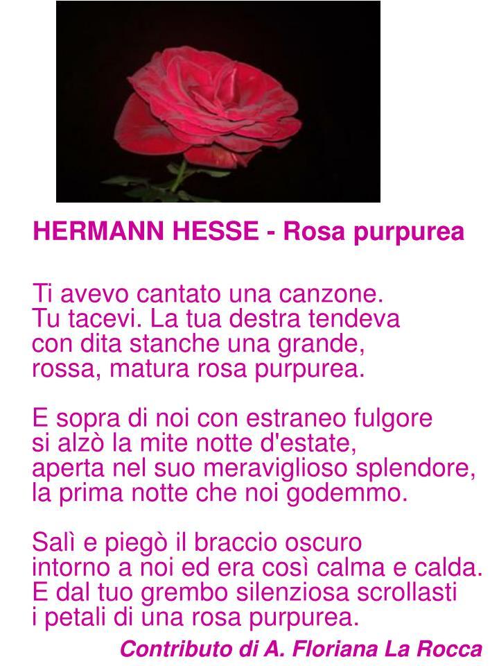 HERMANN HESSE - Rosa purpurea