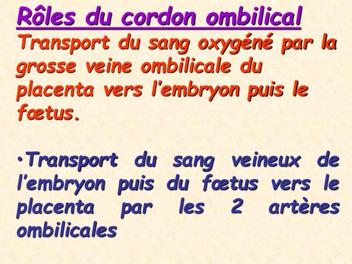 Rôles du cordon ombilical