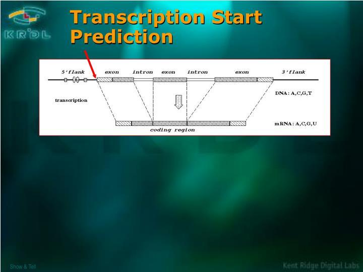 Transcription Start Prediction