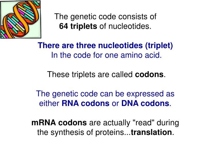 nucleotide triplets
