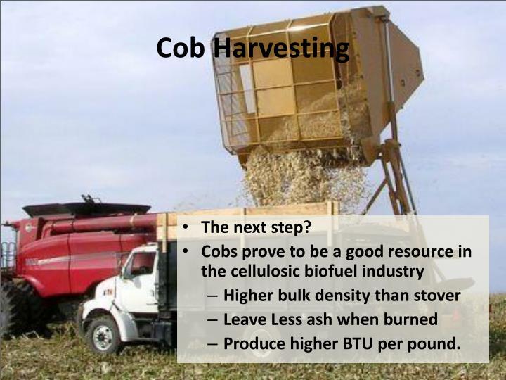 Cob Harvesting