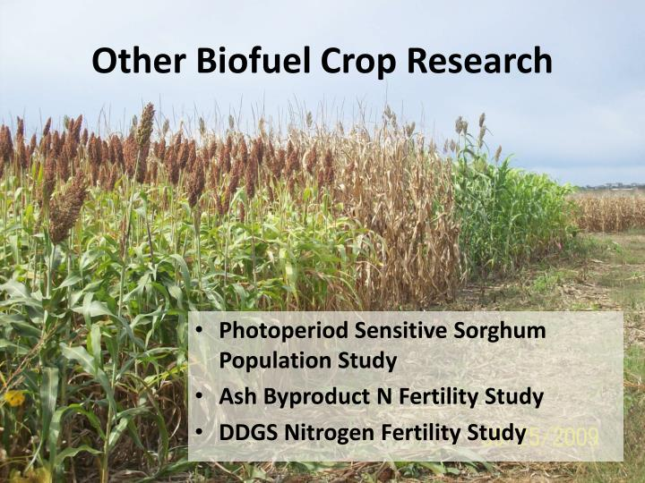 Other Biofuel Crop Research