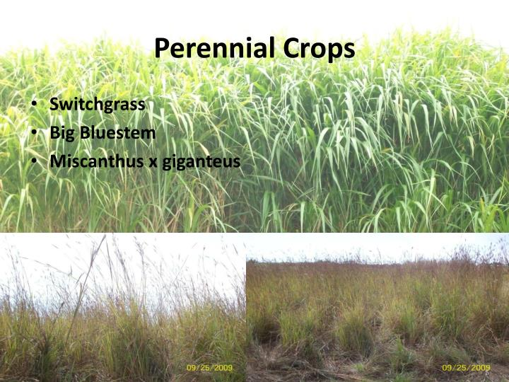 Perennial Crops