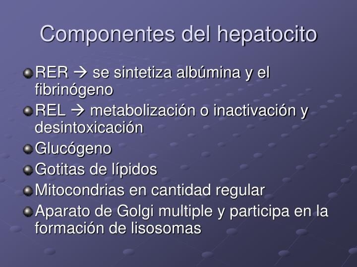 Componentes del hepatocito