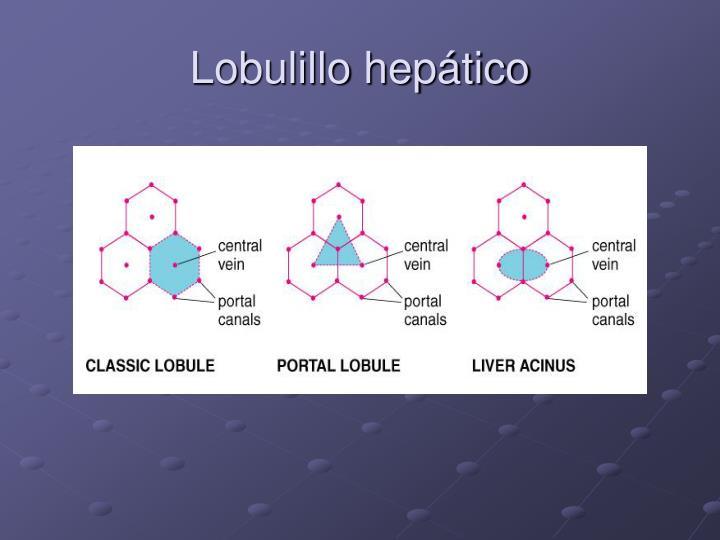 Lobulillo hepático
