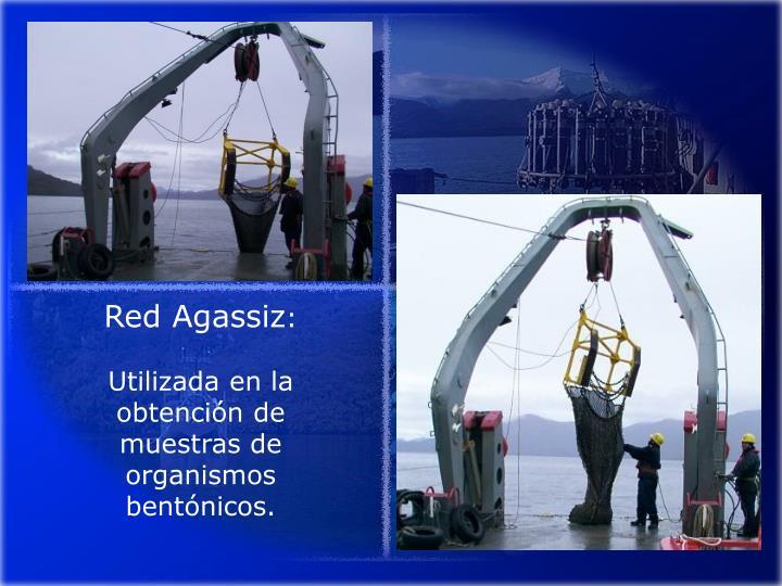 Red Agassiz