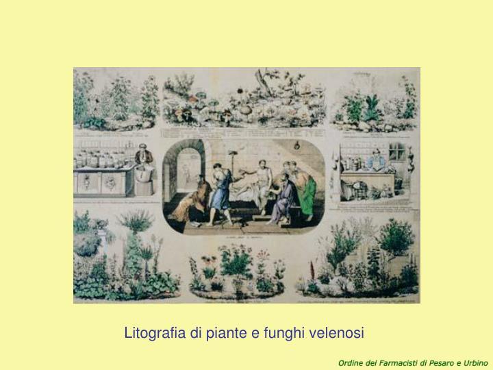 Litografia di piante e funghi velenosi