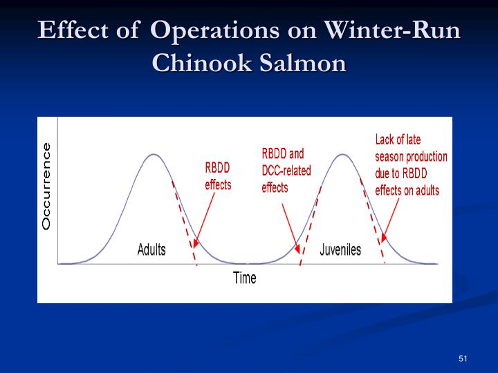 Effect of Operations on Winter-Run Chinook Salmon