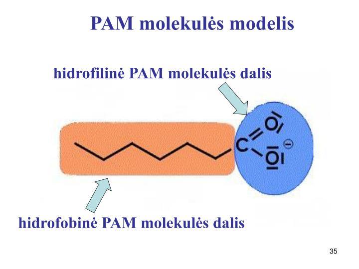 PAM molekulės modelis