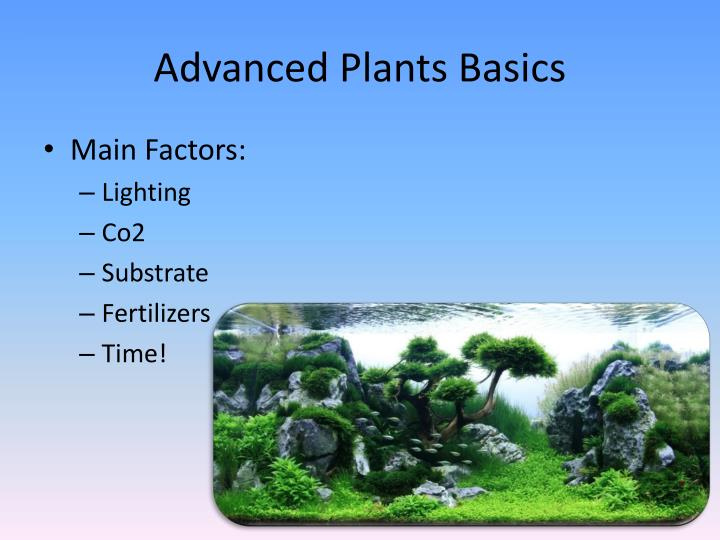 Advanced plants basics
