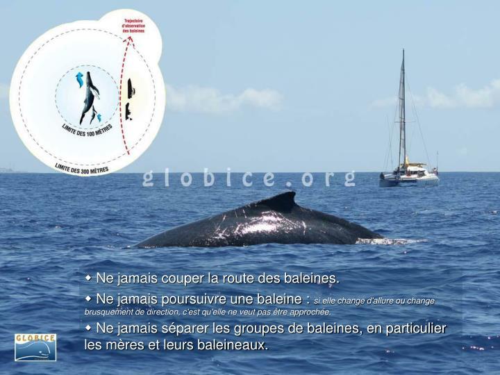 Ne jamais couper la route des baleines.