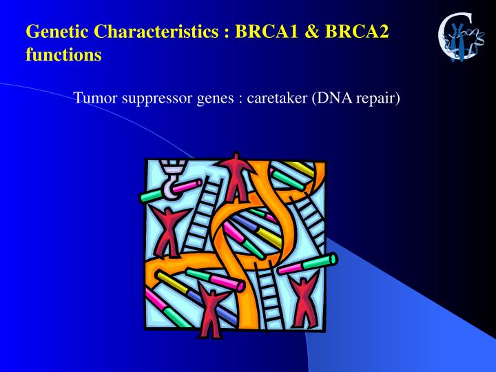Genetic Characteristics : BRCA1 & BRCA2 functions
