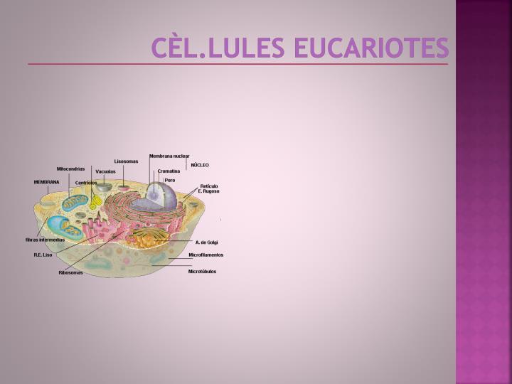 cèl.LulEs
