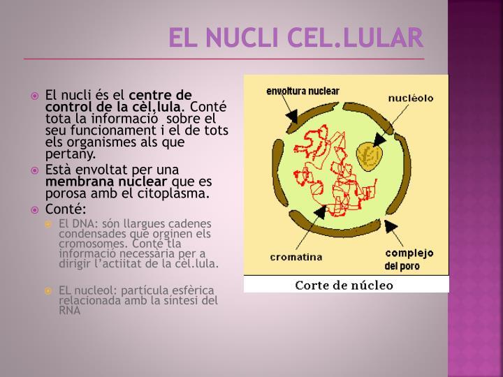 El nucli