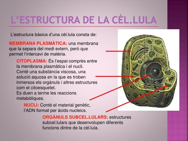L'estructura