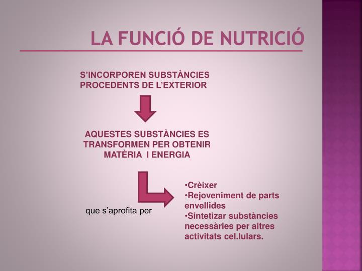 LA FUNCIÓ DE NUTRICIÓ