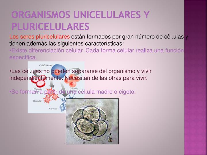 Organismos unicelulares y pluricelulares