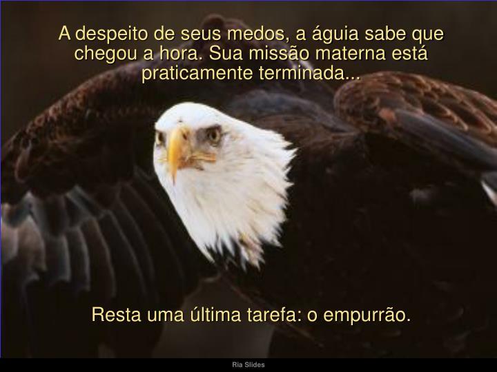 A despeito de seus medos, a águia sabe que chegou a hora. Sua missão materna está  praticamente terminada...