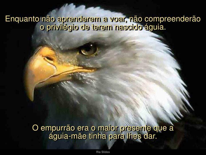 Enquanto não aprenderem a voar, não compreenderão o privilégio de terem nascido águia.