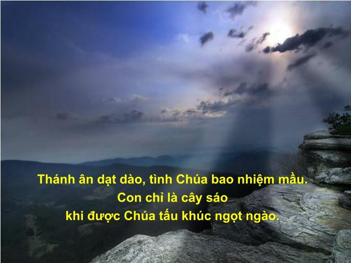 Thánh ân dạt dào, tình Chúa bao nhiệm mầu.