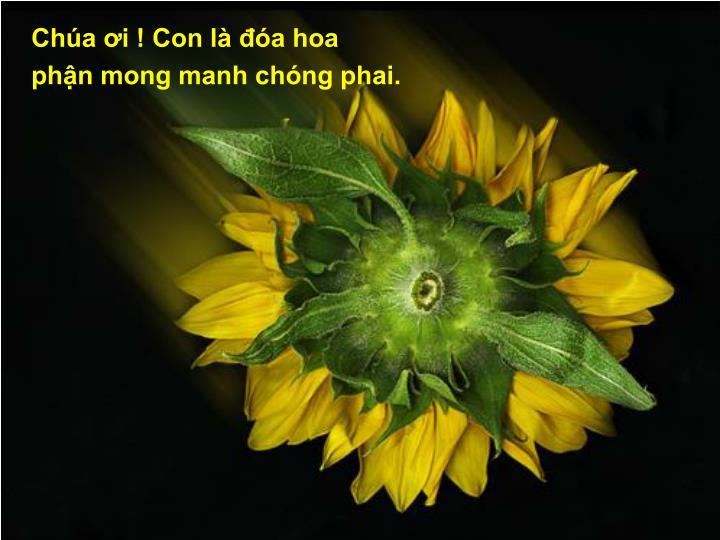 Cha i ! Con l a hoa