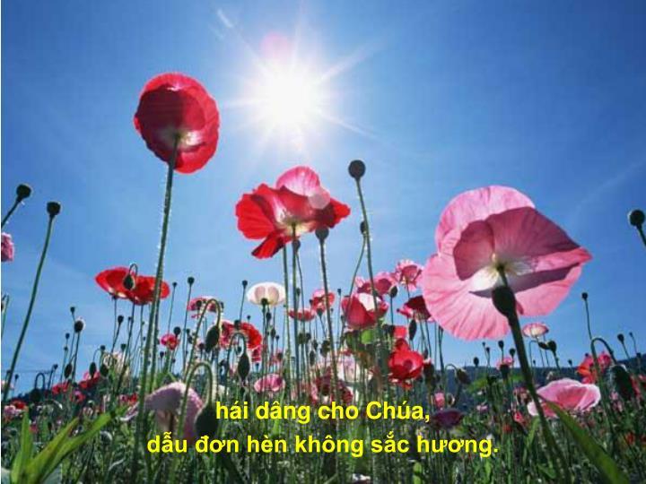 hi dng cho Cha,
