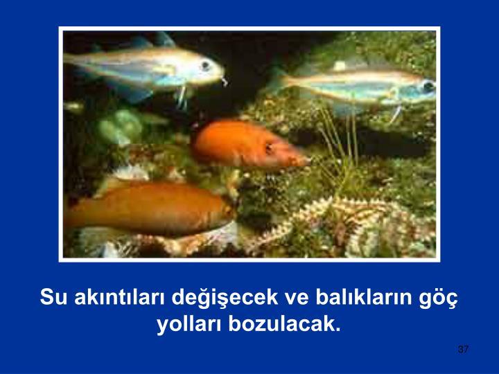 Su akıntıları değişecek ve balıkların göç yolları bozulacak.