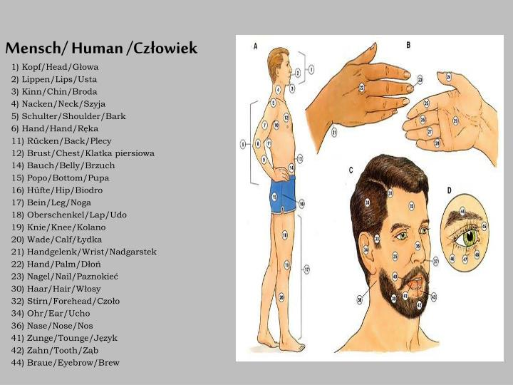 Mensch/ Human /Człowiek