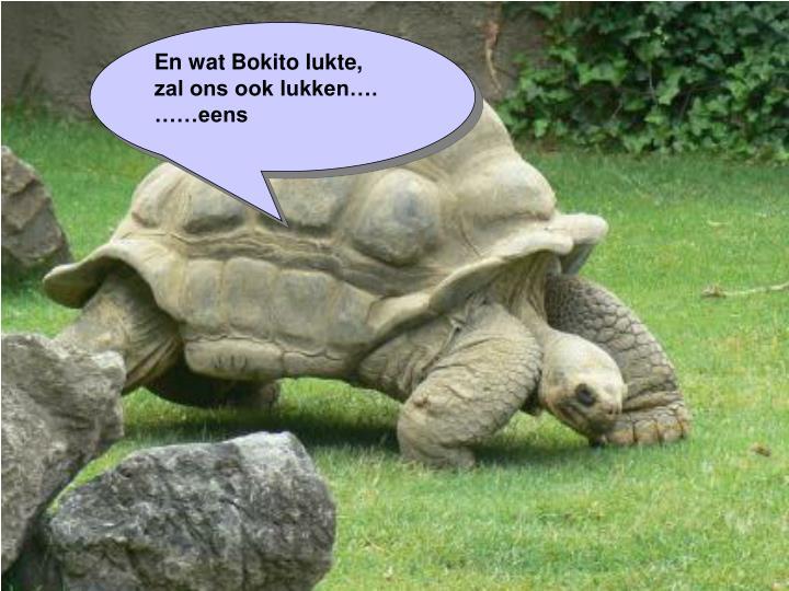 En wat Bokito lukte,