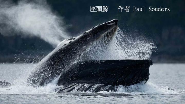 座頭鯨   作者