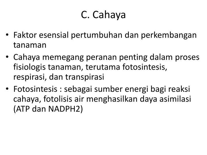 C. Cahaya