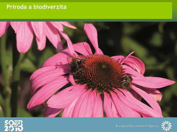 Príroda a biodiverzita