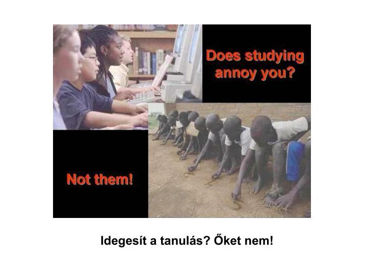 Idegesít a tanulás? Őket nem!