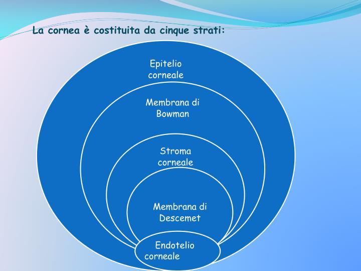 La cornea è costituita da cinque strati: