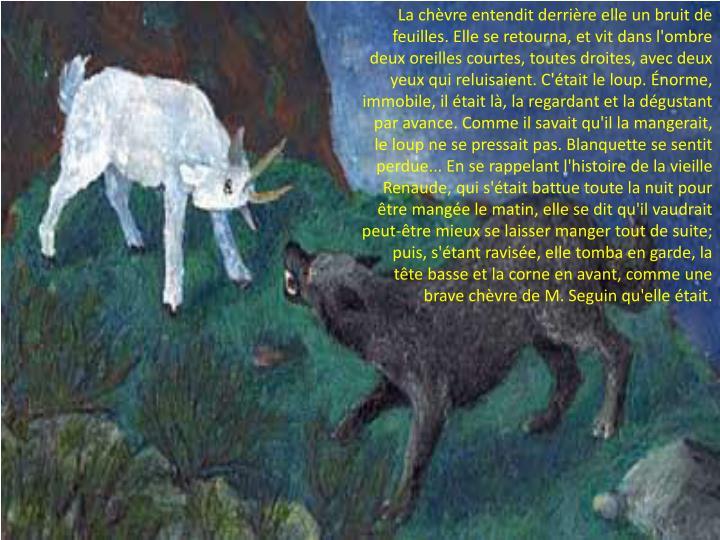 La chèvre entendit derrière elle un bruit de feuilles. Elle se retourna, et vit dans l'ombre deux oreilles courtes, toutes droites, avec deux yeux qui reluisaient. C'était le loup. Énorme, immobile, il était là, la regardant et la dégustant par avance. Comme il savait qu'il la mangerait, le loup ne se pressait pas. Blanquette se sentit perdue... En se rappelant l'histoire de la vieille Renaude, qui s'était battue toute la nuit pour être mangée le matin, elle se dit qu'il vaudrait peut-être mieux se laisser manger tout de suite; puis, s'étant ravisée, elle tomba en garde, la tête basse et la corne en avant, comme une brave chèvre de M. Seguin qu'elle était.