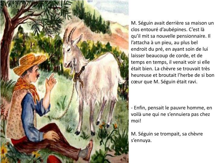 M. Séguin avait derrière sa maison un clos entouré d'aubépines. C'est là qu'il mit sa nouvelle pensionnaire. Il l'attacha à un pieu, au plus bel endroit du pré, en ayant soin de lui laisser beaucoup de corde, et de temps en temps, il venait voir si elle était bien. La chèvre se trouvait très heureuse et broutait l'herbe de si bon cœur que M. Séguin était ravi.